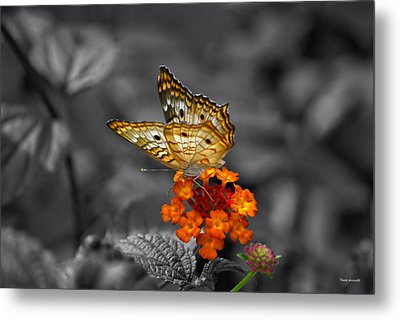 Butterfly Wings Of Sun Light Selective Coloring Black And White Digital Art Metal Print by Thomas Woolworth