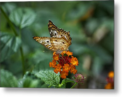 Metal Print featuring the photograph Butterfly Wings Of Sun Light by Thomas Woolworth