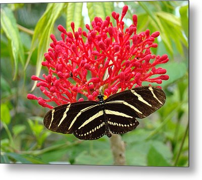 Butterfly With Its Host Metal Print