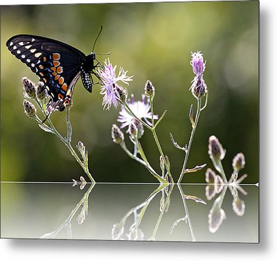 Butterfly With Reflection Metal Print by Eleanor Abramson