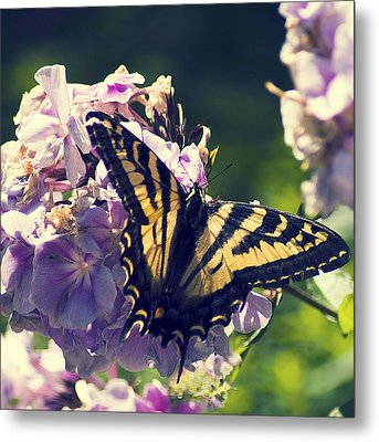 Metal Print featuring the photograph Butterfly by Yulia Kazansky