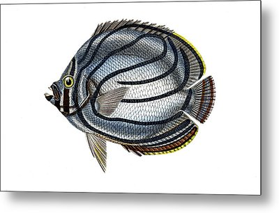Butterflyfish Metal Print by Collection Abecasis