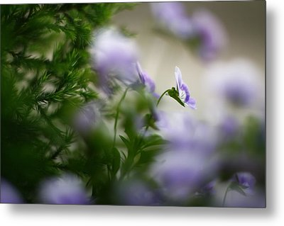 Butterfly's Dream 4 Metal Print by Afrison Ma
