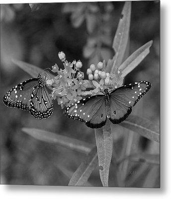 Butterflys Metal Print by Joseph G Holland