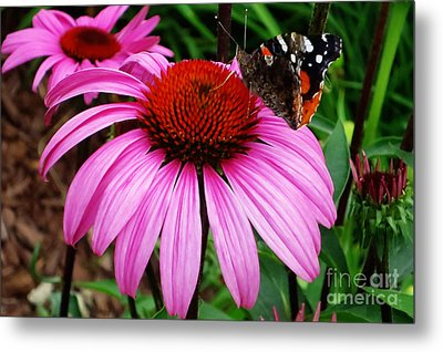 Butterly On Flower Metal Print by Claudette Bujold-Poirier