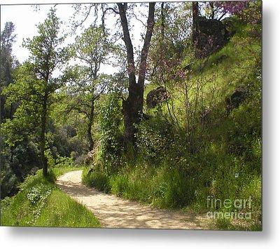 Buttermilk Trail South Yuba Metal Print