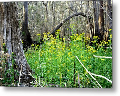 Butterweed Florida Wildflower Metal Print by Debra Forand