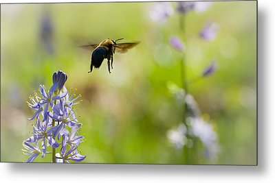 Buzz Off Metal Print by Annette Hugen