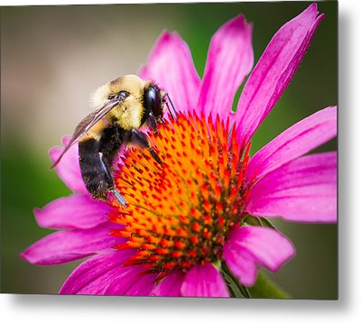 Buzzed In Eureka Springs Metal Print by Annette Hugen
