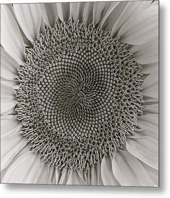Bw Sunflower Metal Print