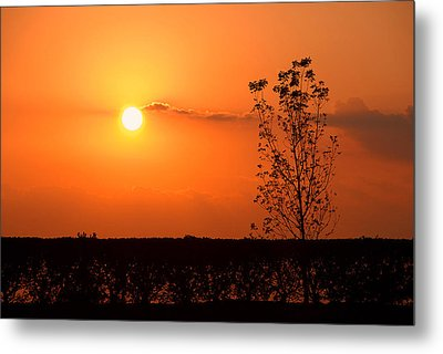 Metal Print featuring the photograph By The Everglades by Lorenzo Cassina