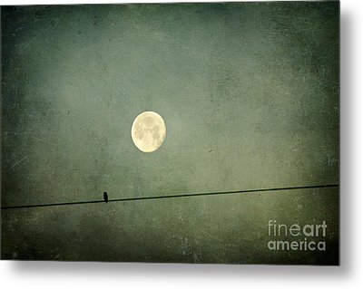 By The Light Of The Moon Metal Print by Joan McCool