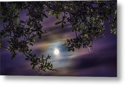 By The Moonlight Metal Print by Rob Sellers