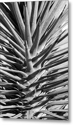 Cactus 1 Metal Print