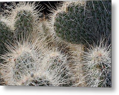 Cactus 11 Metal Print