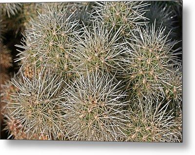 Cactus 14 Metal Print