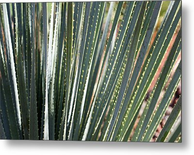 Cactus 8 Metal Print