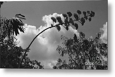 Metal Print featuring the photograph Cactus And Cloud by Kenny Glotfelty