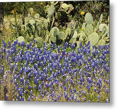 Cactus And Wild Flowers Metal Print