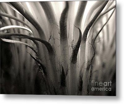 Cactus Bloom In Sepia Metal Print by Ellen Cotton
