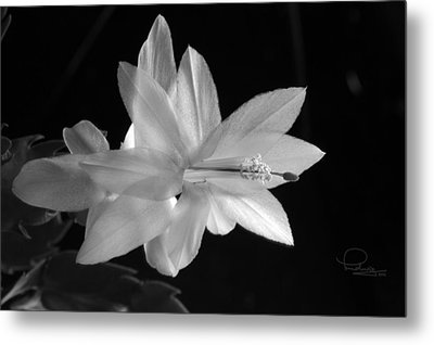 Metal Print featuring the photograph Cactus Blossom by Ludwig Keck
