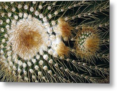 Cactus Close-up Metal Print