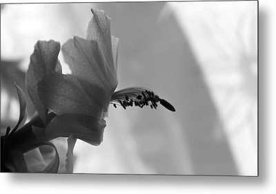 Metal Print featuring the photograph Cactus Dance by Silke Brubaker