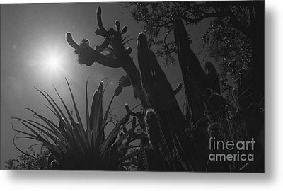 Metal Print featuring the photograph Cactus Family - 2 by Kenny Glotfelty