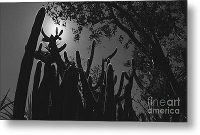 Metal Print featuring the photograph Cactus Family by Kenny Glotfelty