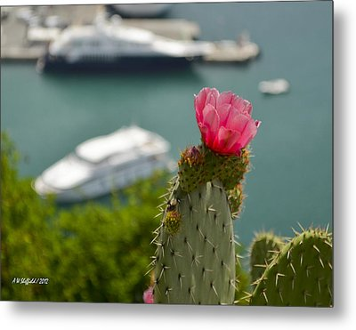 Cactus Flower Above The Port Of Nice Metal Print by Allen Sheffield
