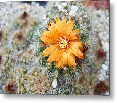 Cactus Flower Metal Print by Marina Oliveira