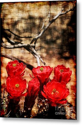 Metal Print featuring the photograph Cactus Flowers 2 by Julie Lueders