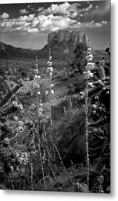 Metal Print featuring the photograph Cactus Flowers And Courthouse Bluff Bw by Dave Garner