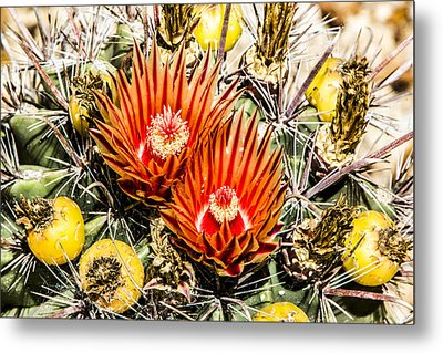 Metal Print featuring the digital art Cactus Flowers And Fruit by Photographic Art by Russel Ray Photos