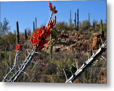 Metal Print featuring the photograph Cactus Flowers by Diane Lent