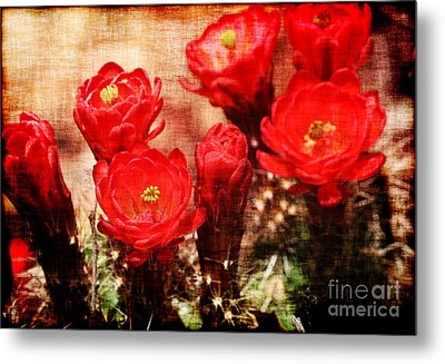 Metal Print featuring the photograph Cactus Flowers by Julie Lueders