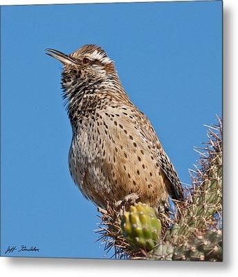 Cactus Wren Singing Metal Print by Jeff Goulden