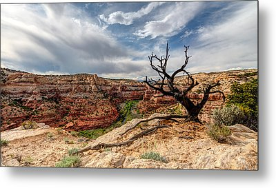 Calf Creek Metal Print by Dustin  LeFevre