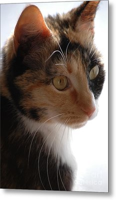 Metal Print featuring the photograph Cali by Christiane Hellner-OBrien