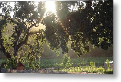 Metal Print featuring the photograph Cali Lite by Shawn Marlow