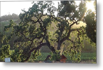 Metal Print featuring the photograph Cali Setting by Shawn Marlow