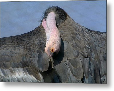 California Condor Metal Print