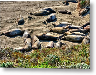 Metal Print featuring the photograph California Dreaming by Jim Carrell