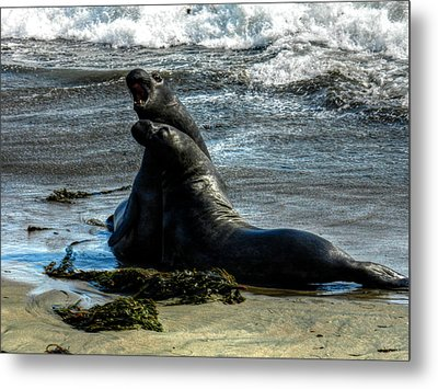 California - Elephant Seals Of Big Sur 006 Metal Print by Lance Vaughn
