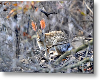Homeless Hare Metal Print