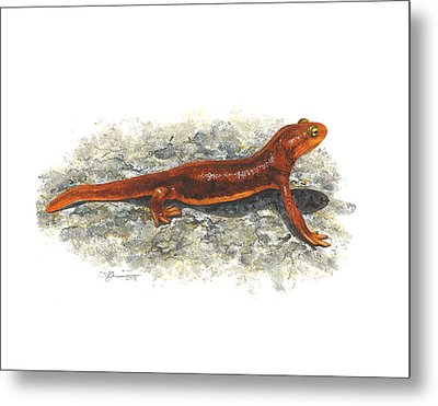 California Newt Metal Print by Cindy Hitchcock