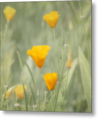 California Poppies Metal Print by Kim Hojnacki