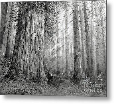 California Redwood Metal Print by Jim Hubbard
