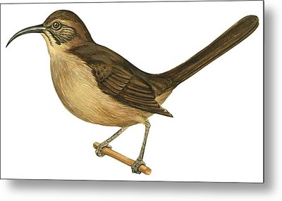 California Thrasher Metal Print by Anonymous
