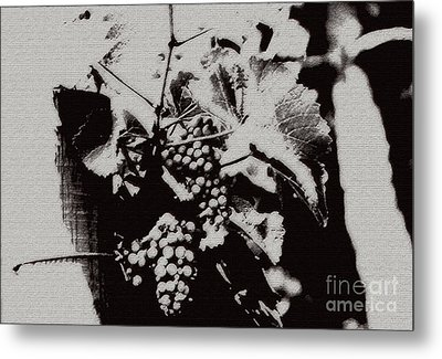 California Vineyard Metal Print by Linda Shafer